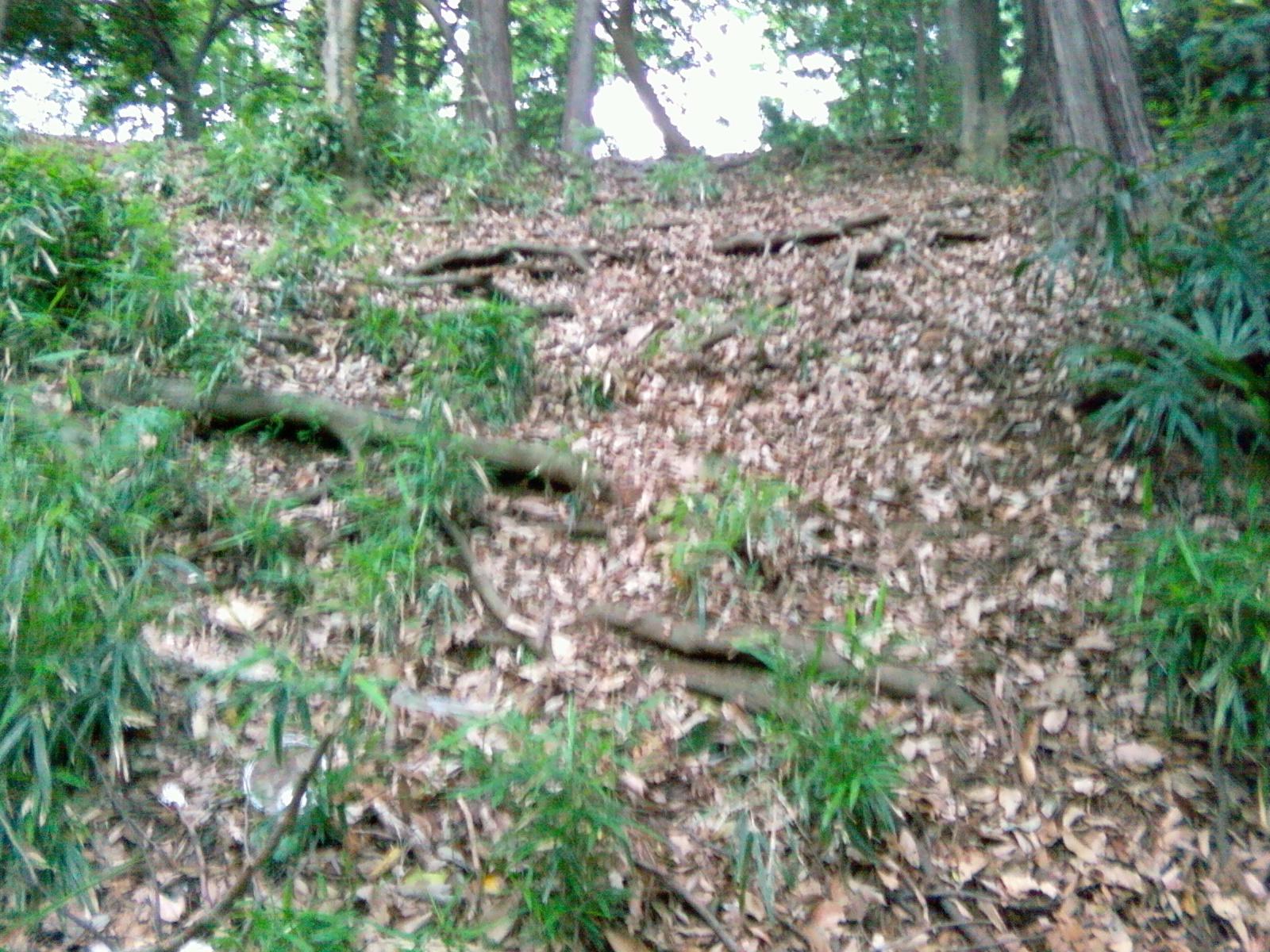 木の根が走る崖