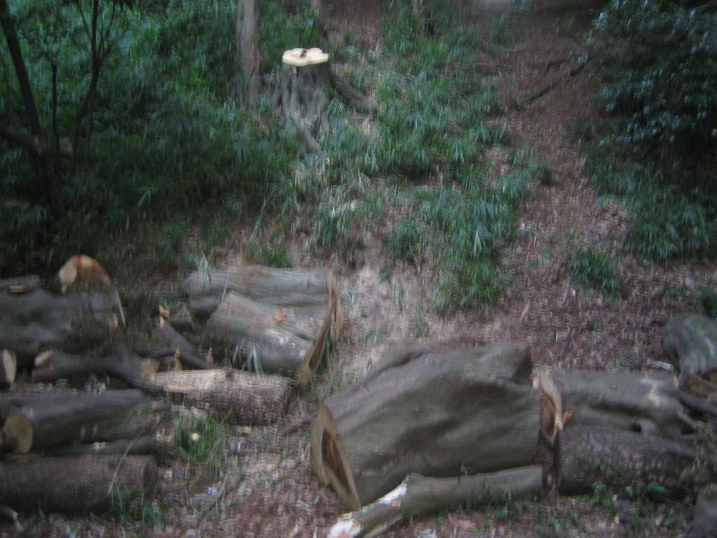 崖出口の木の幹