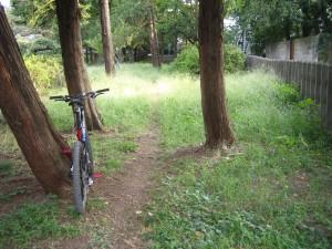 前に複数の木が切られた場所
