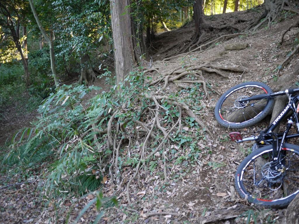 左の緑が絡んだ根っこに前輪が引っかかり前転