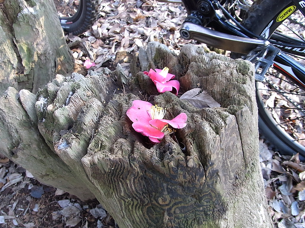 木の切り株に置かれた花