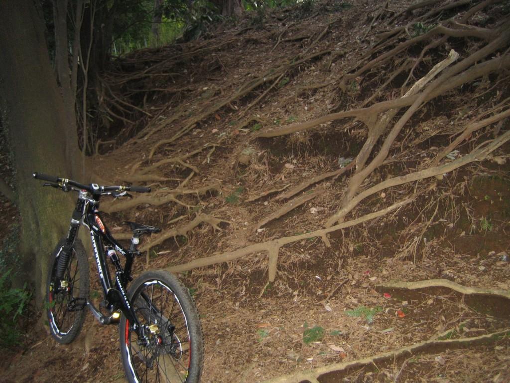 崖崩れで根っこが露出した場所