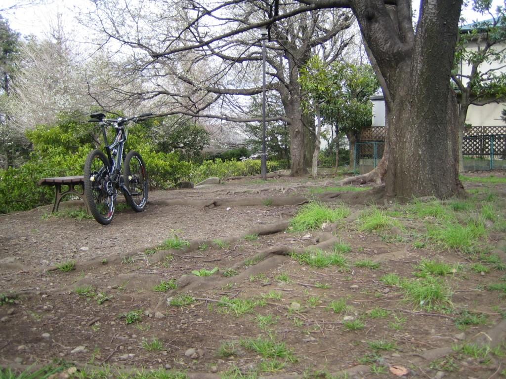 見事な根っこがある公園
