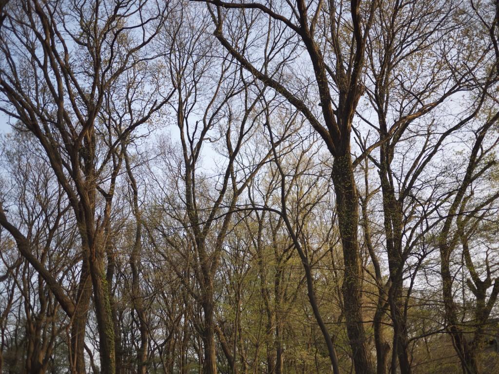 S山自然林