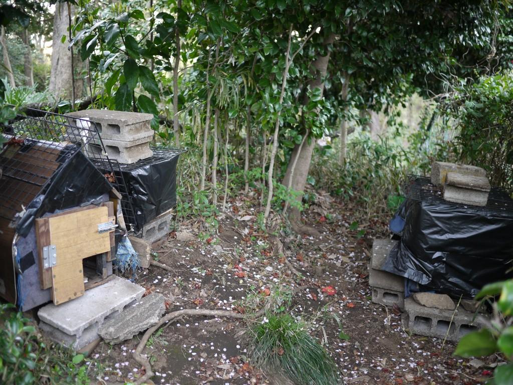 今年4月に撮影した猫の小屋らしきもの