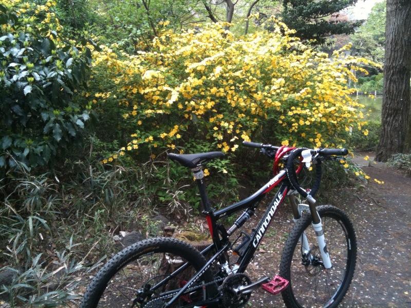 黄色いお花とRize号