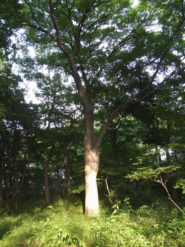 西日を浴びる樹木
