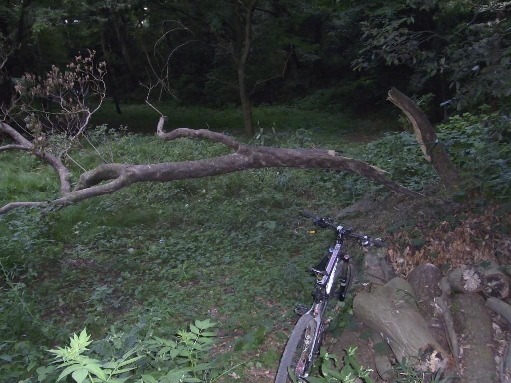 出口に倒木が…!