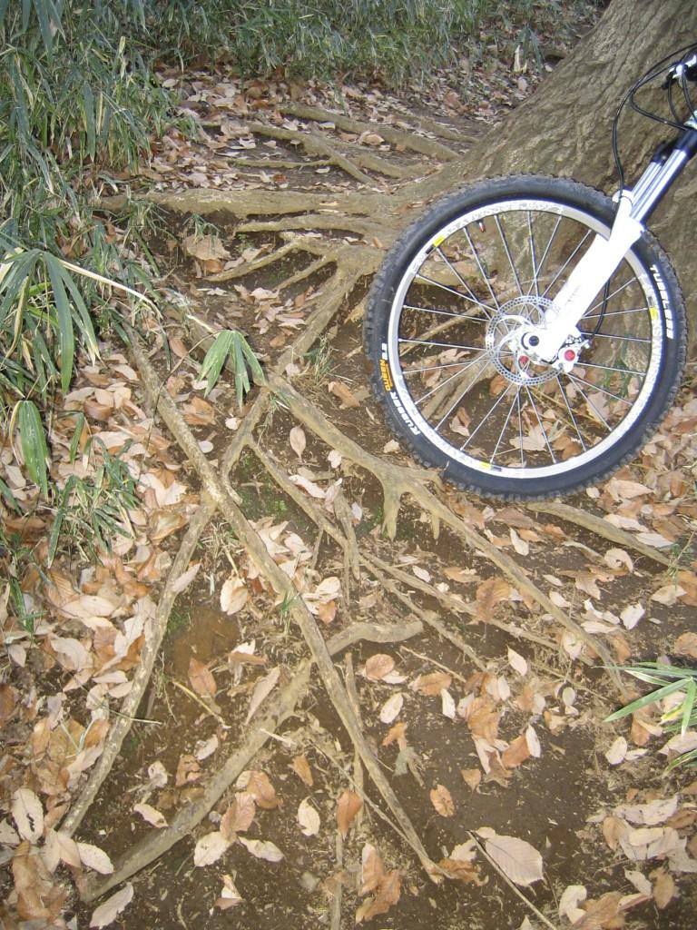 この斜めに走る根っこに前後輪が取られます
