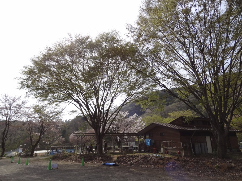 葉桜。多少は花も残っていました。