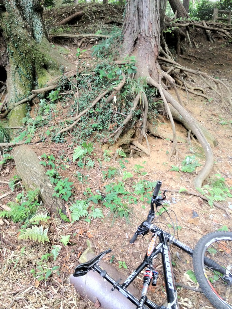 奥の木の根っこにぶら下がるものが