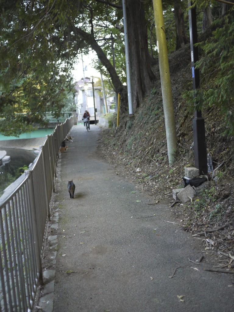 猫と人のいる風景
