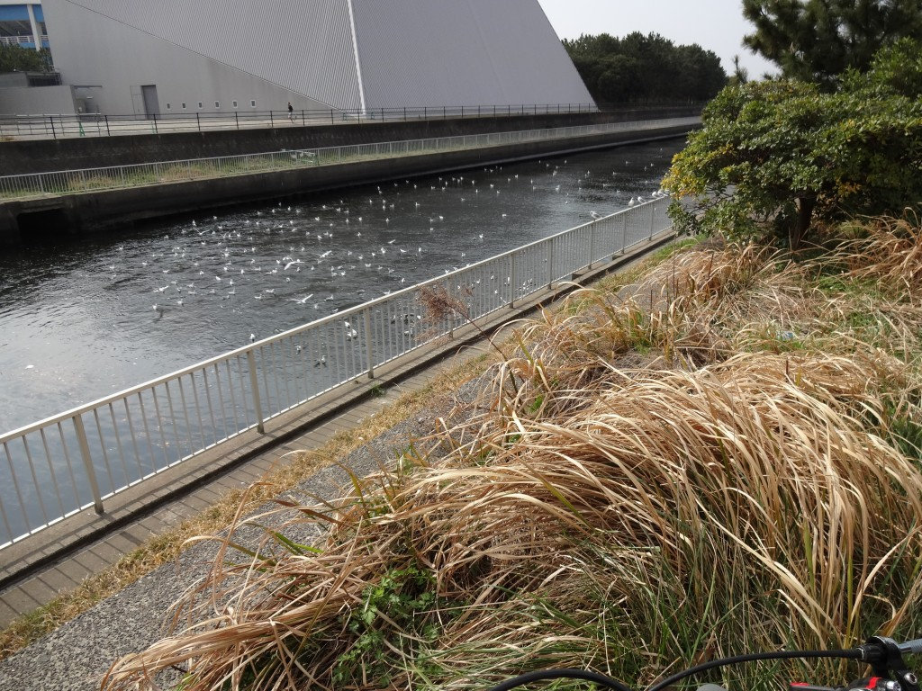 スタジアムと公園の間の川