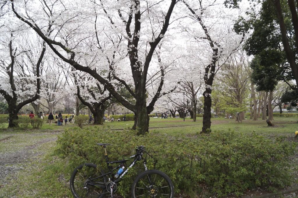 公園・緑地の最も上流の公園