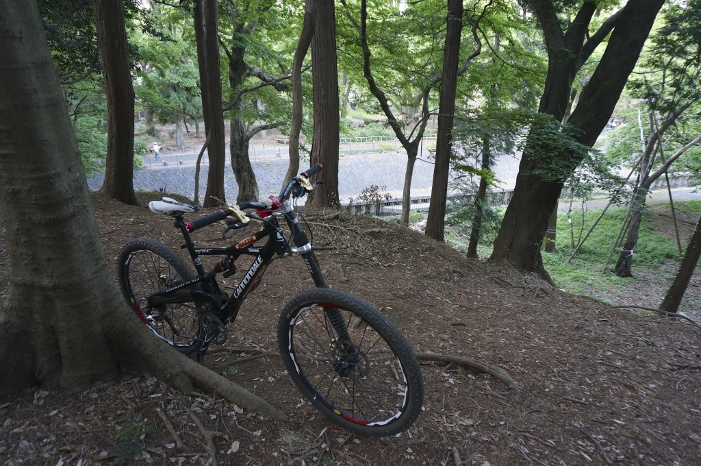 cannondale prophet in 裏山