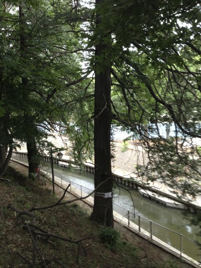 この木は高さ20m以上あると思います