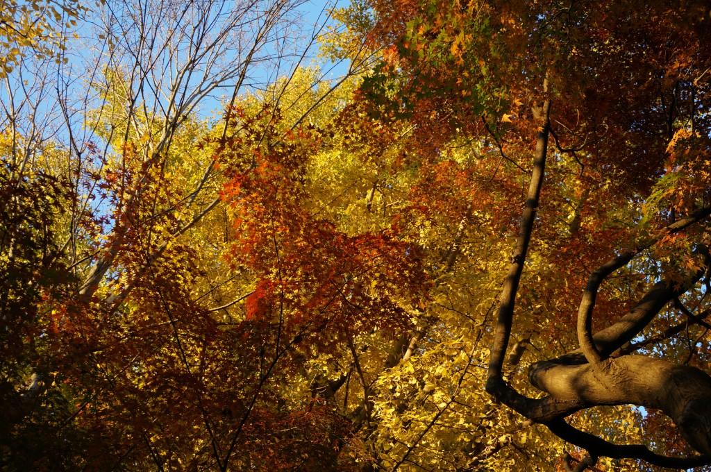 いよいよ秋も終わり