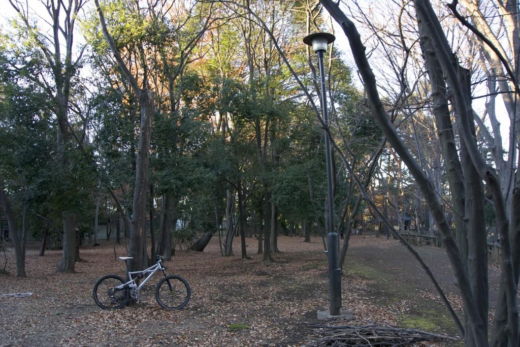 木々を抜けるのが楽しいセクション