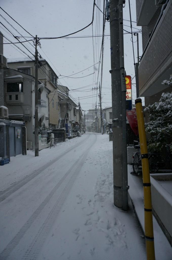 久々の積雪です