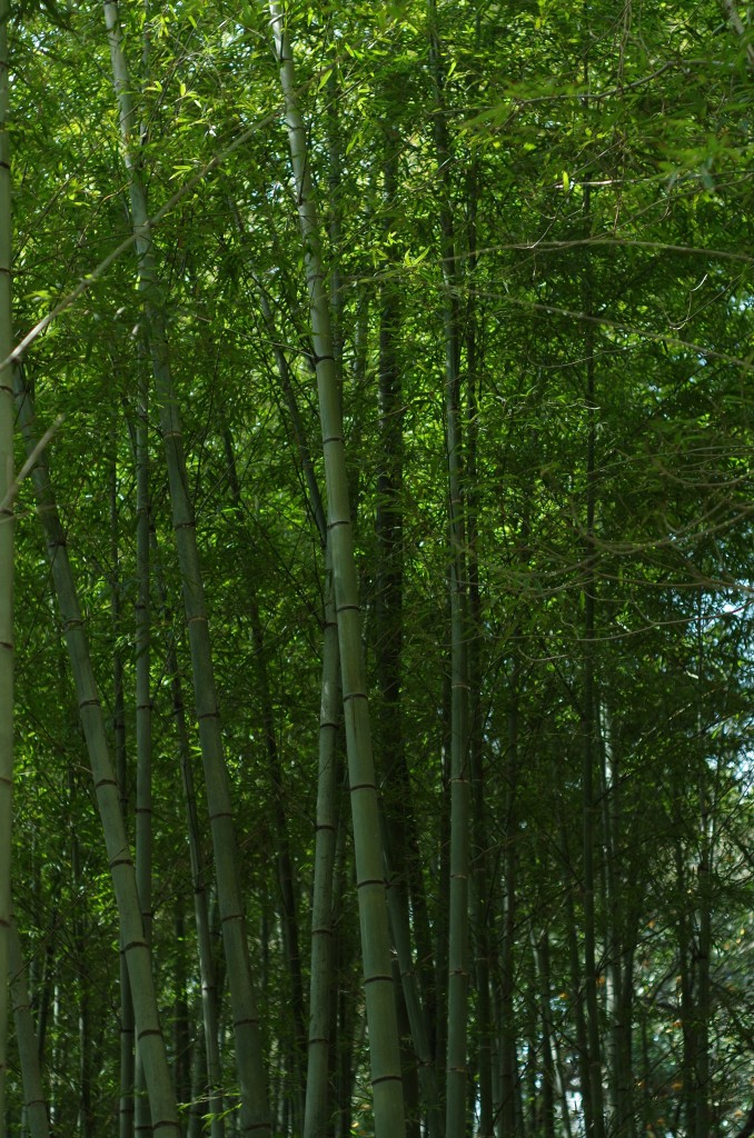 竹林の緑がキレイ。K-30。