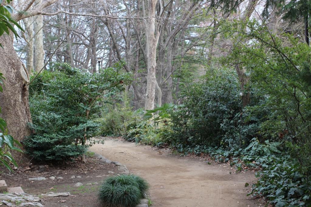 杉並トレイル