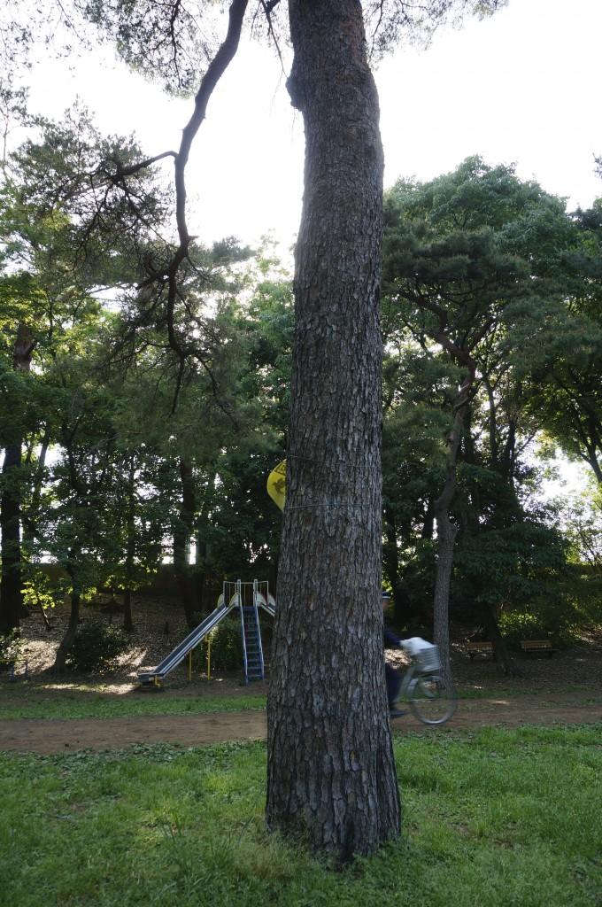 この木があったおかげで直撃を免れた?