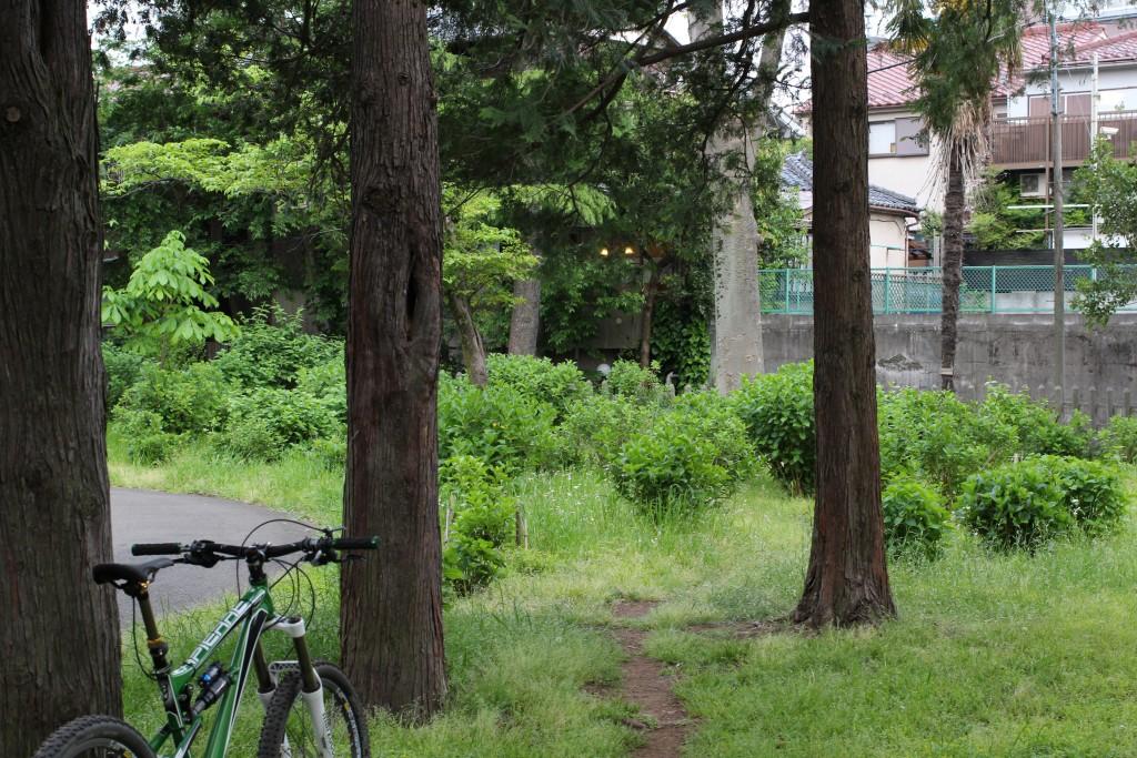 そしていつもの緑地へ