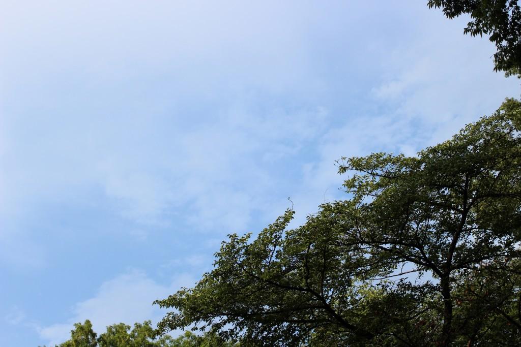 少し青空が見えてきてました