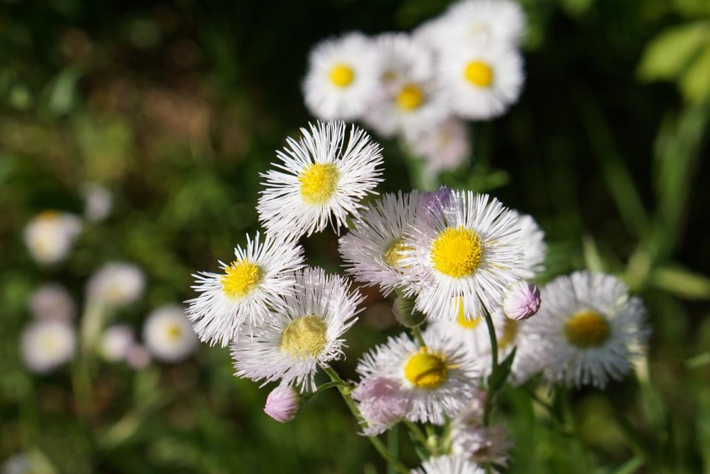 また、お気に入りの花