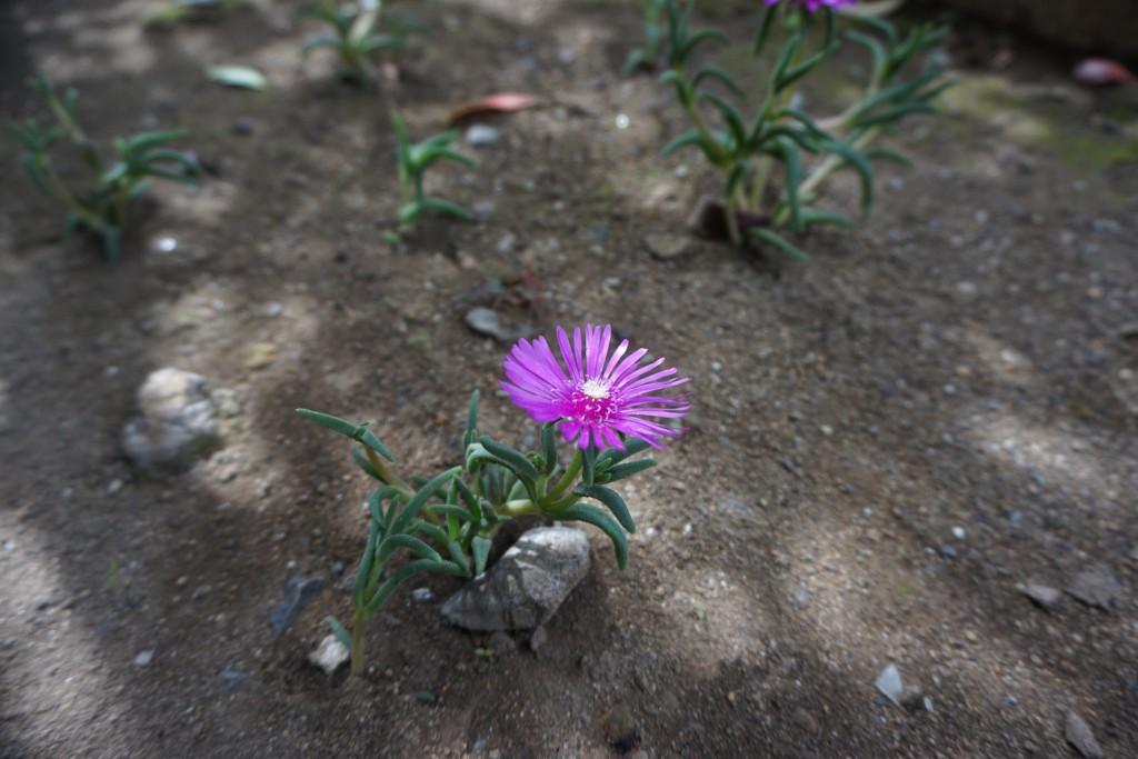 マンション入り口の花壇