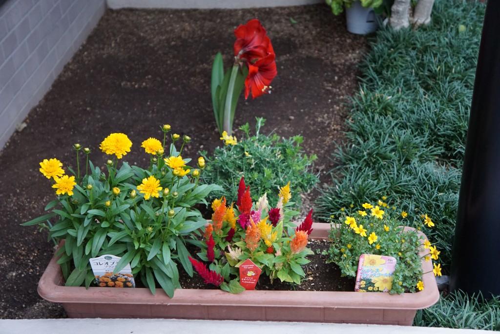 マンションの花壇