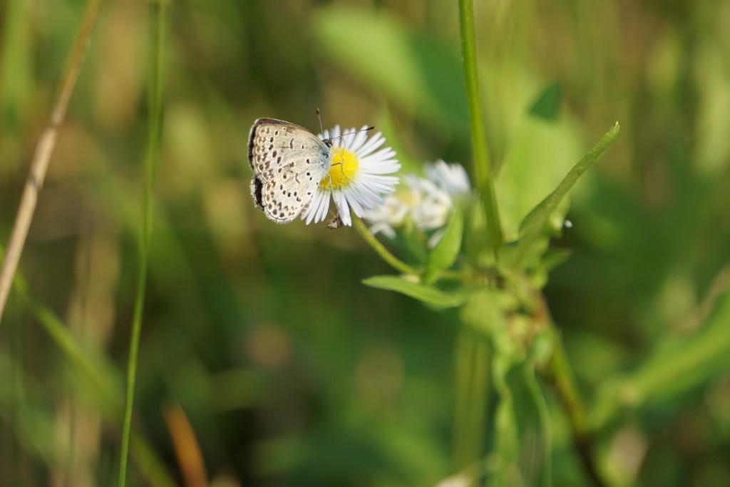 小さめの蝶