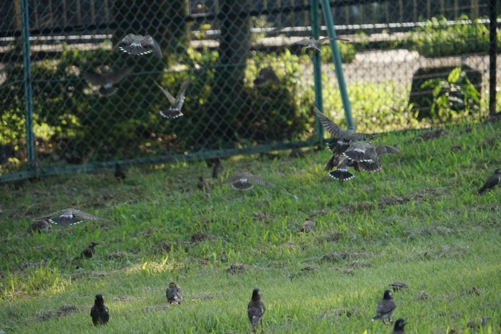 鳥の広場を連写