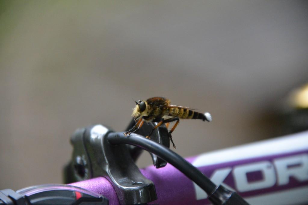 二年前に撮影したこの虫