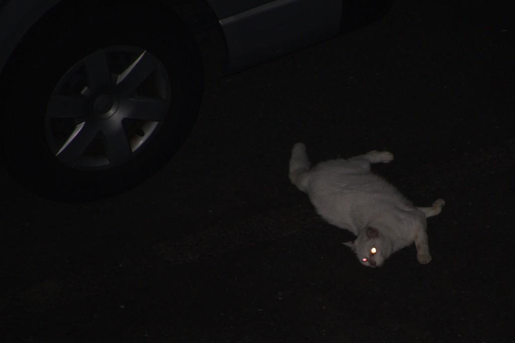 平和を乱された猫