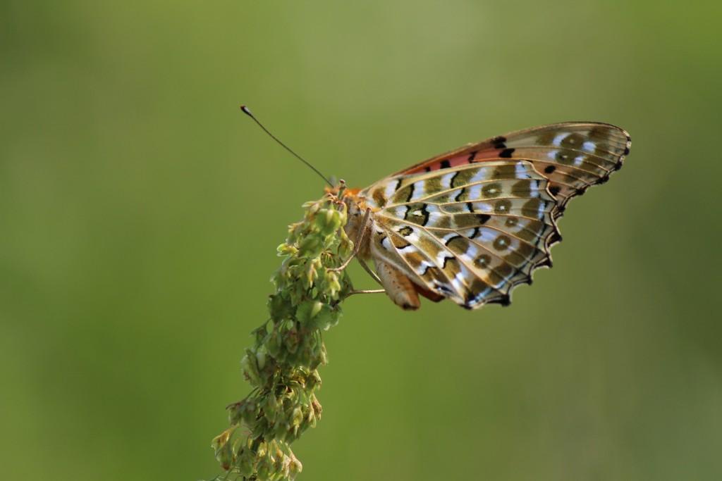まさか蝶を撮れるとは思っていませんでしたが