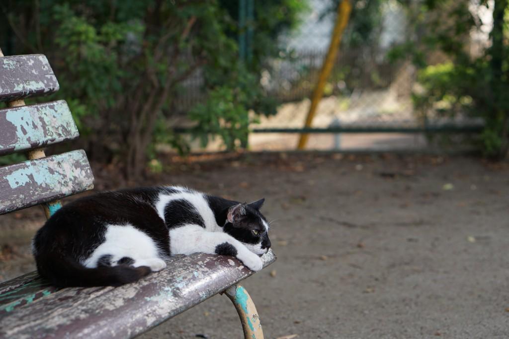 こちらの猫は皮膚病を煩っているように見える