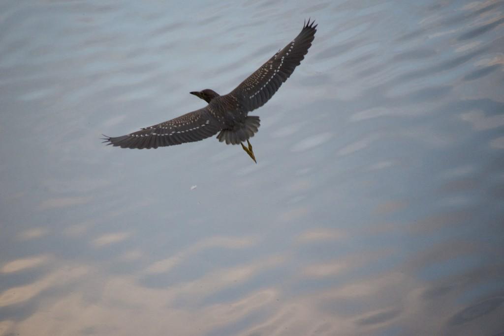 ゴイサギらしき鳥も飛び去る