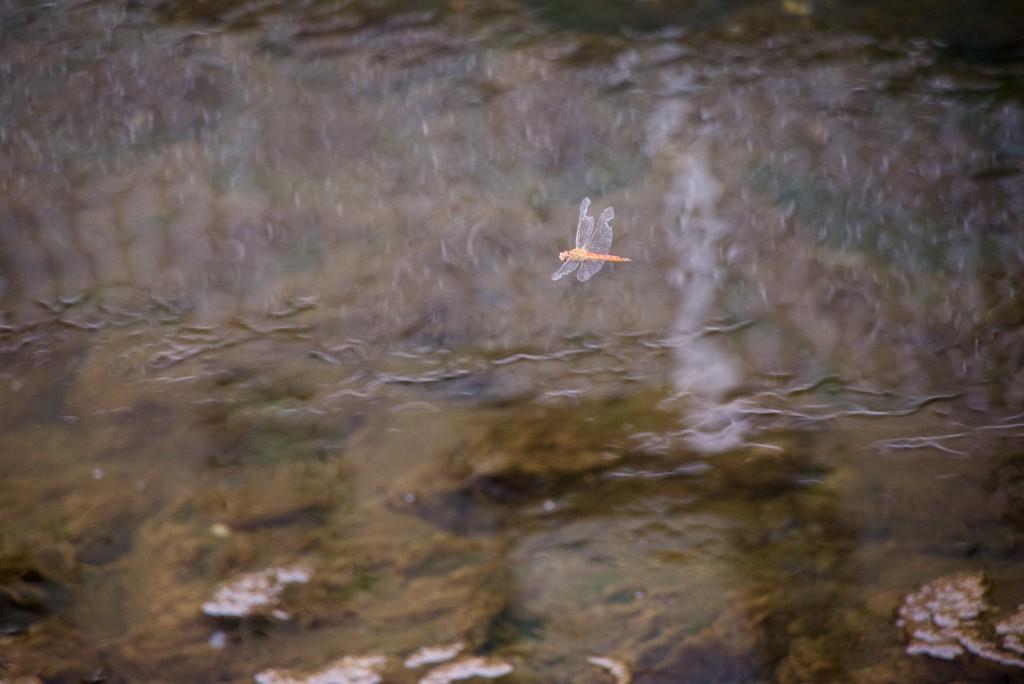 川面に映える(私の撮影)