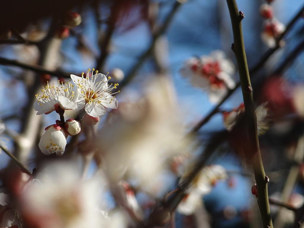 間もなく春が