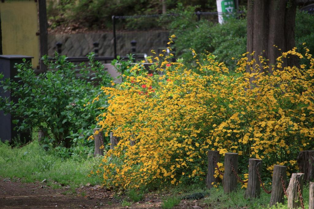 公園も黄色や…
