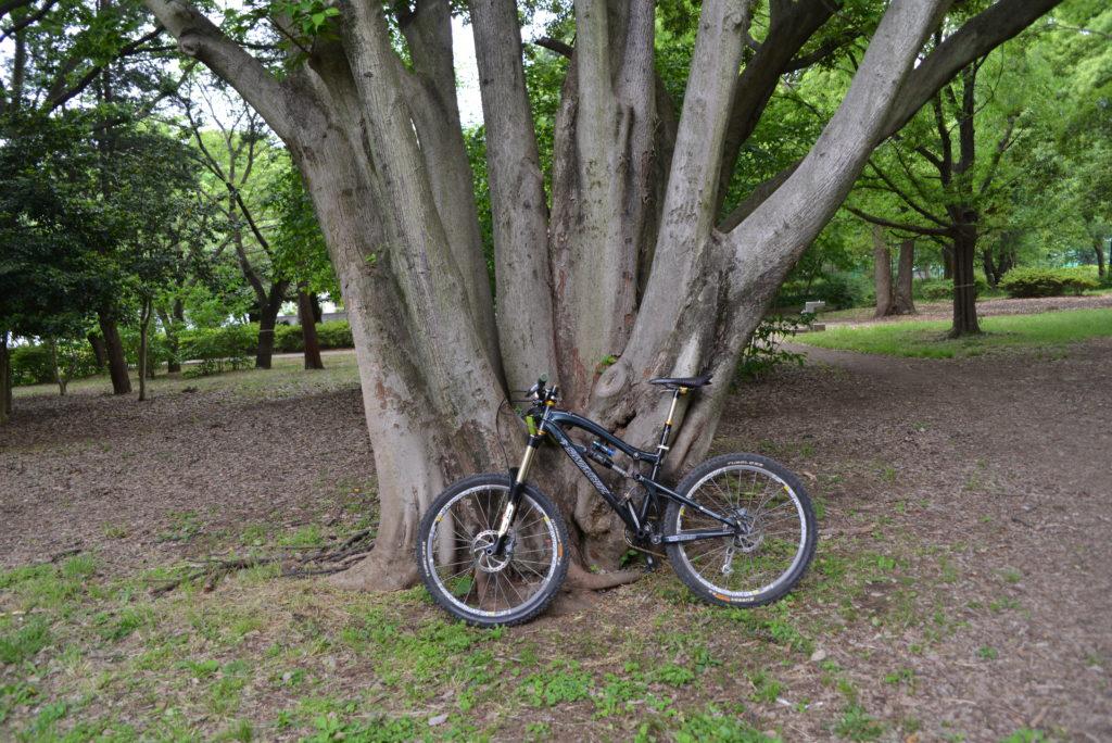 よく雨宿りに使う木