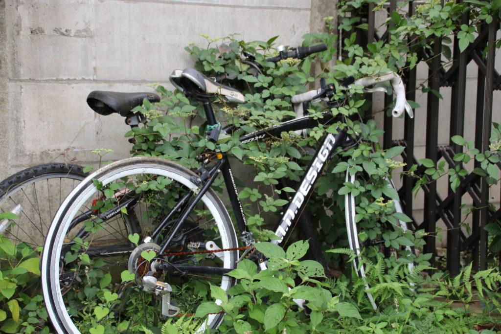 ご近所の自然と同化したバイク