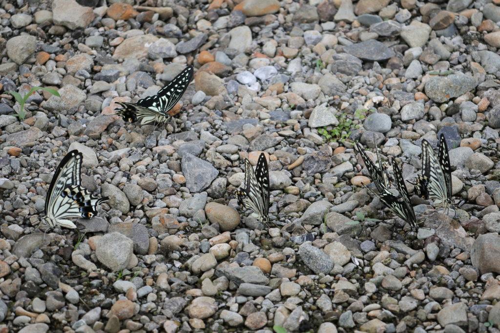 さながら、蝶々の団地