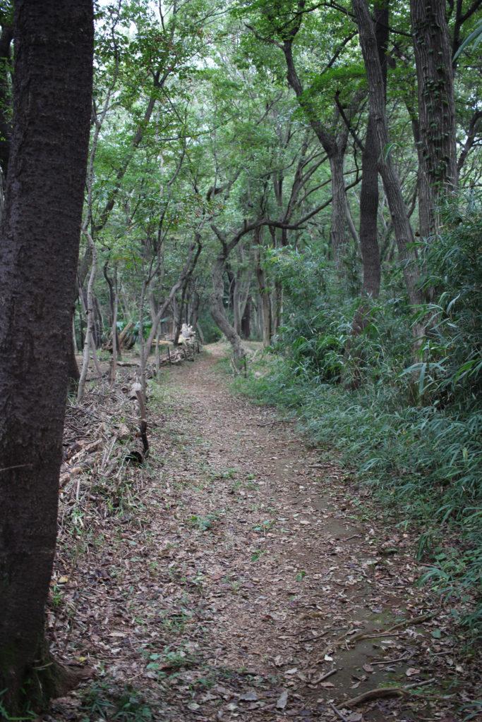 M山 一の森
