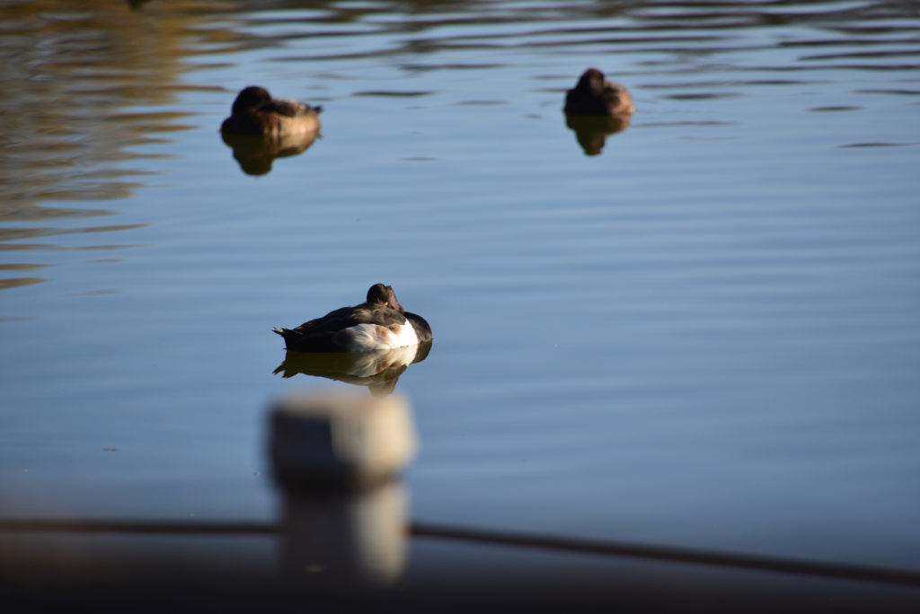 鳥さんの平和