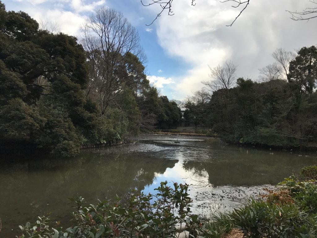 カワセミの池が