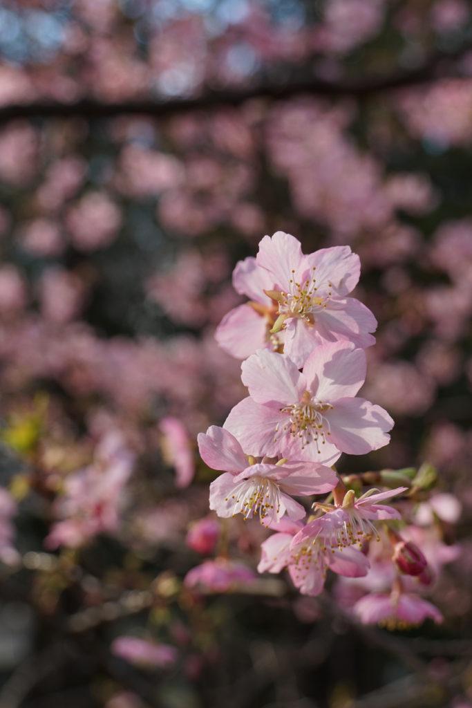 この花もかわいい