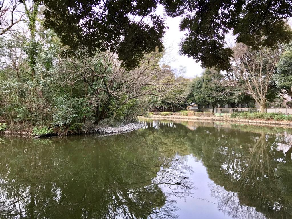 カワセミ池には水が戻ってきました