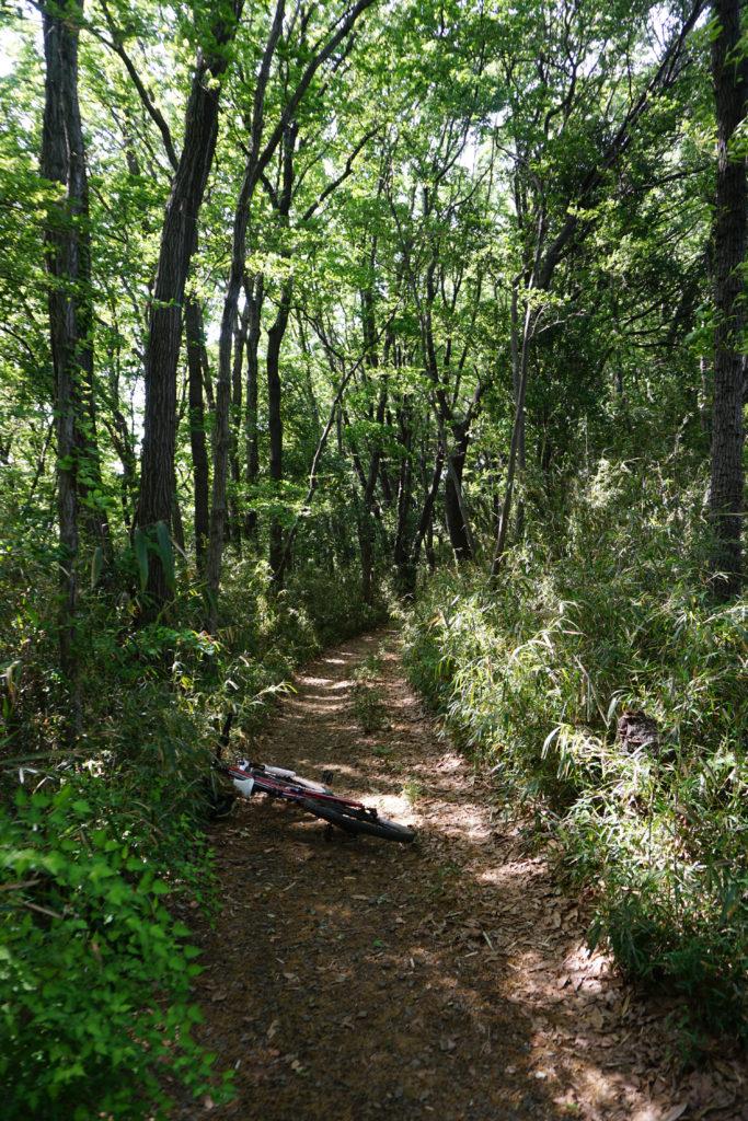 最後の長い林道での走りはかなりよかったと思います